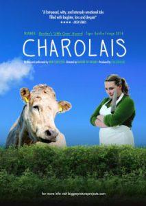 charolais2